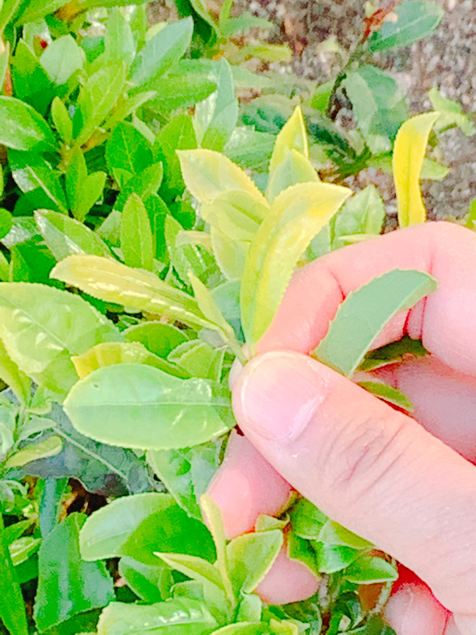 ☆お茶体験講座「茶楽坊」 イメージ
