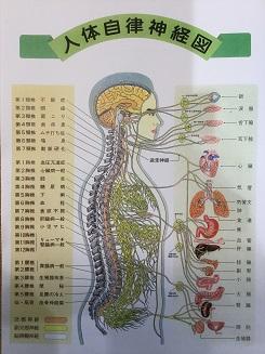 ⑤自律神経を整えて不調改善体操教室≪1回コース≫ イメージ